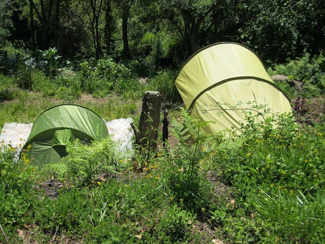Eco-coaching: sleeping and learning in Nature - Montaria - Tent