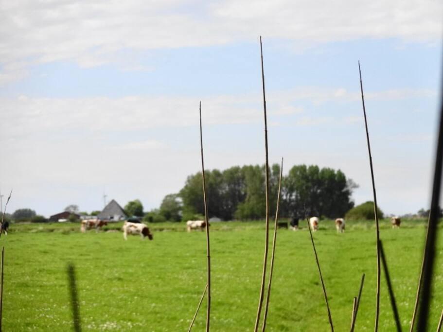 Huisdieren (koeien, schapen, kippen en katten) van de eigenaar
