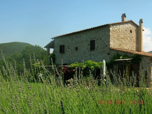 Cheap Holiday in Tuscany Farmhouse! - Castellina Marittima - Wohnung