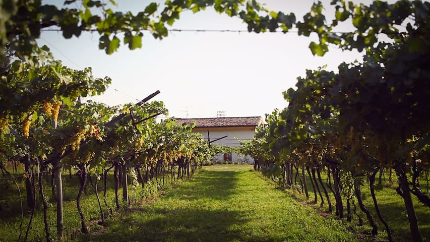 Vacanze in famiglia in Trentino - Rovereto - House