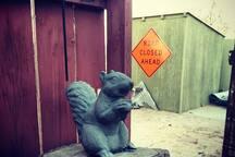 The squirrel philosopher of the desert