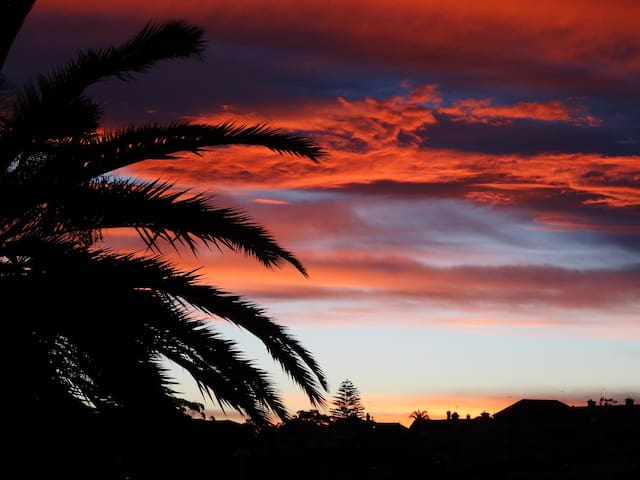 Sunset , picture taken from the street lined with palms