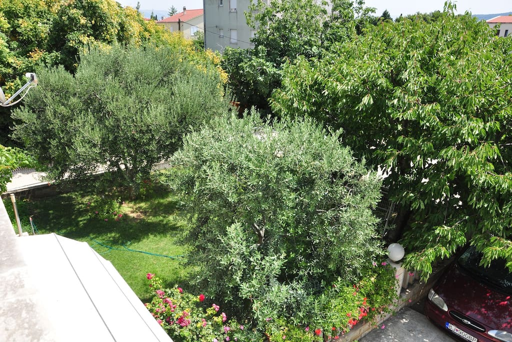 Our garden.