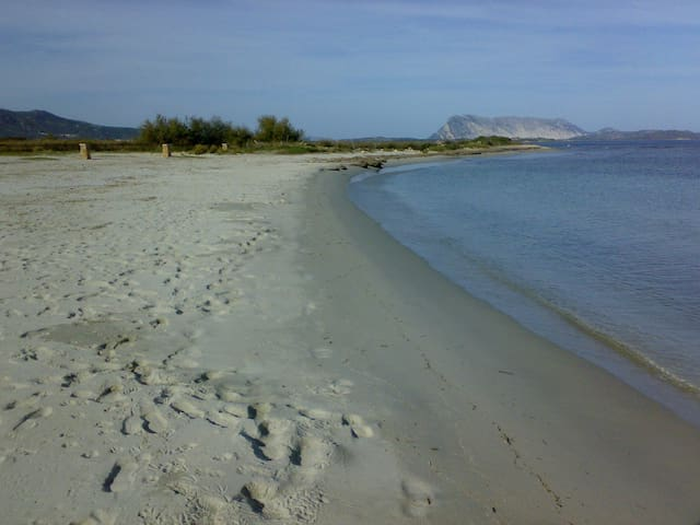 Villa Tavolara sulla spiaggia, vista mare e parco - ซาน เทโอโดโร - วิลล่า