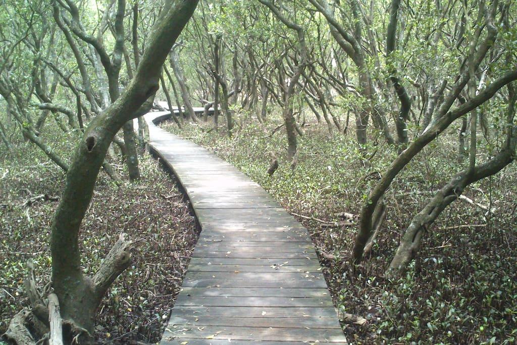 Unique bush worlds & walks