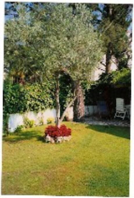 Detalle jardín privado con zona de sol y sobra bajo tres grandes pinos