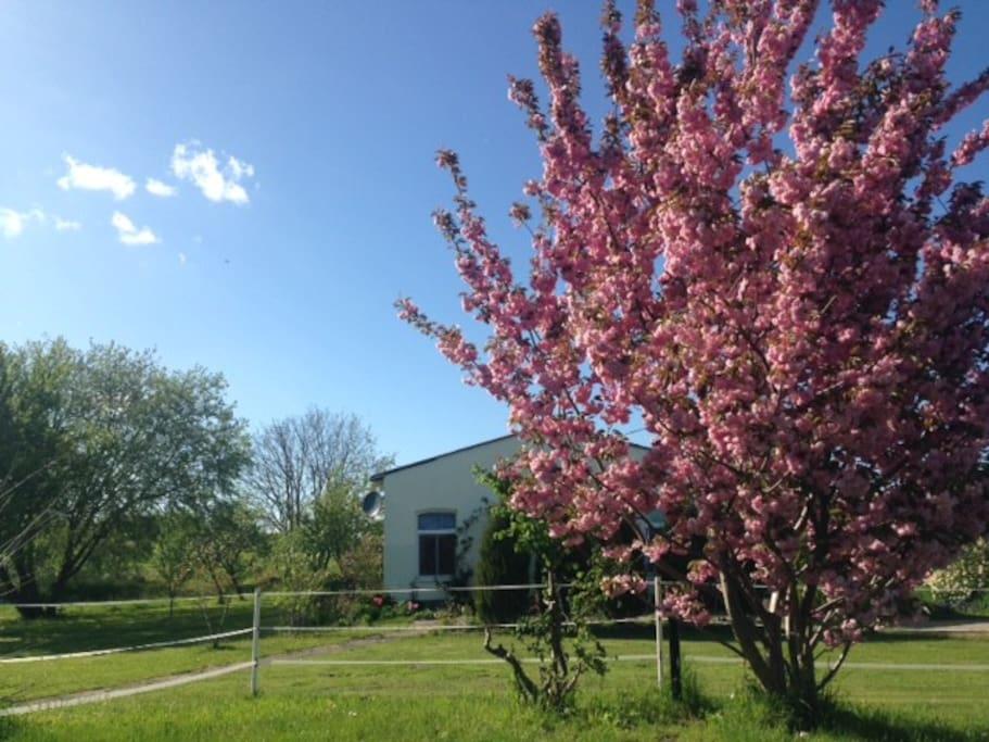 Frühling in Brüel