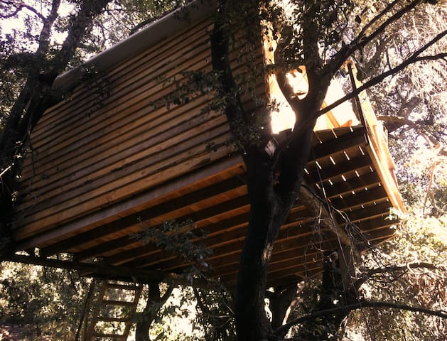 Tree House Barcelona - Molins de Rei - Penzion (B&B)
