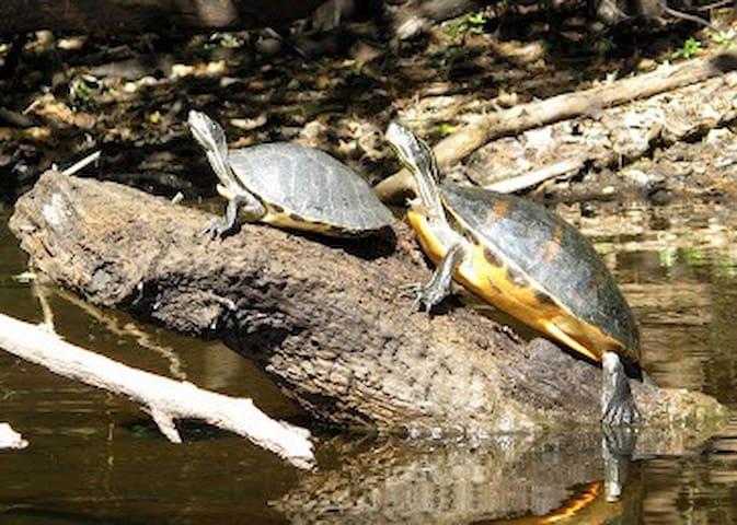 "Loxahatchee means ""River of Turtles"""