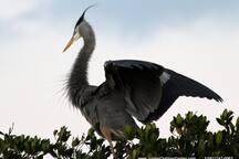 A bird lovers paradise