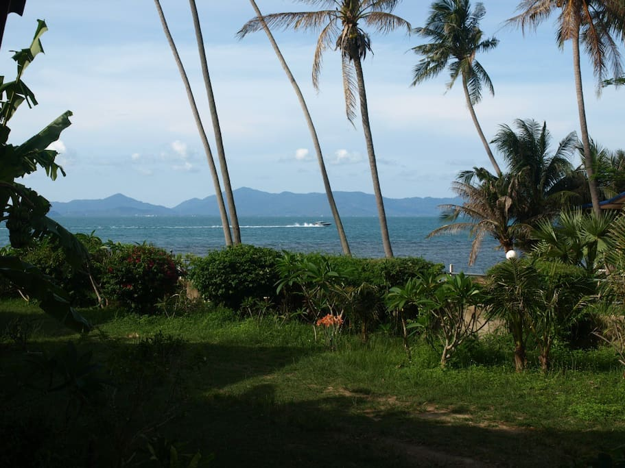 A view of the garden leading to the beachfront