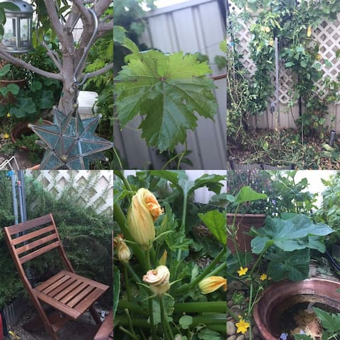 Annie's Urban Permaculture Paradise