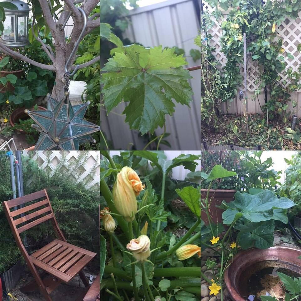 Urban permaculture garden.