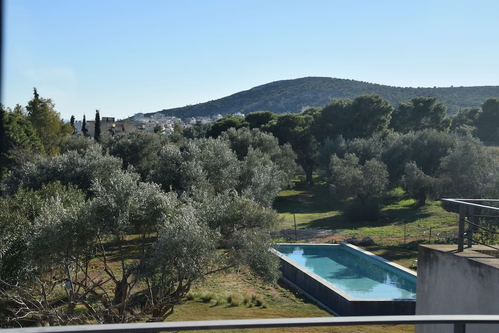 Garden view from terace
