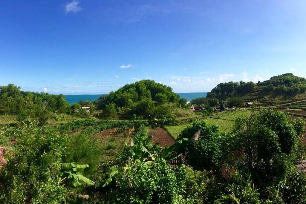 the view from the bungalow