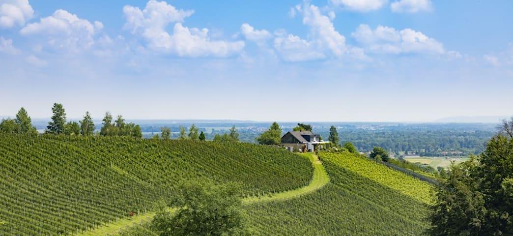Blick auf den Weingarten und das Nachbarhaus des Besitzers