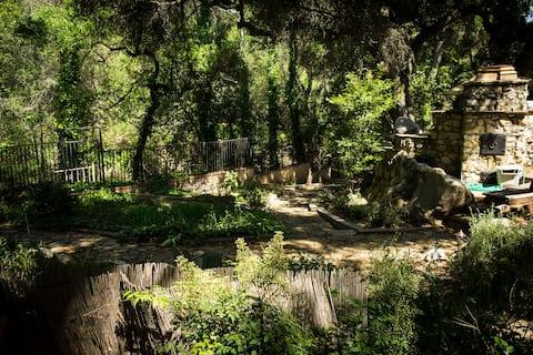Hidden Creek-side Oaks near Ojai