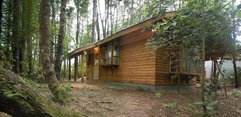 Cabaña acogedora en medio de Bosque Valdiviano.