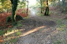 Muchos senderos para caminar