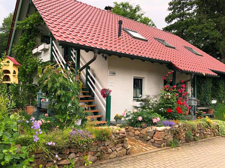 Schöne, großzügige Ferienwohnung im Harz