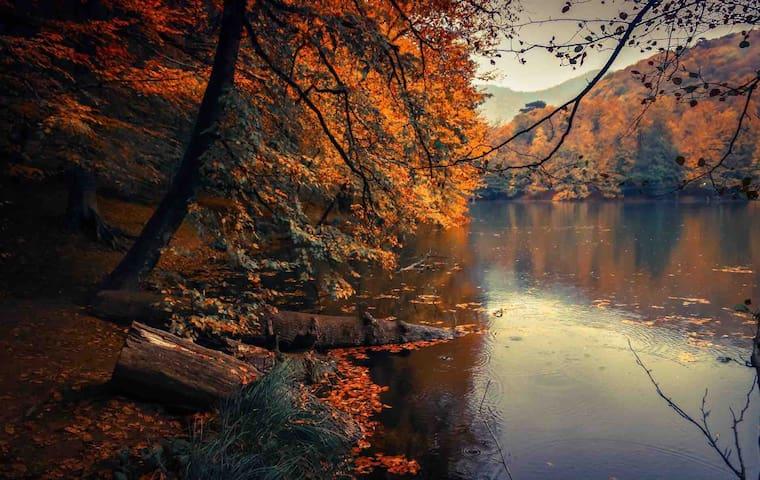 Beautiful foliage during the fall on lake Barkley.