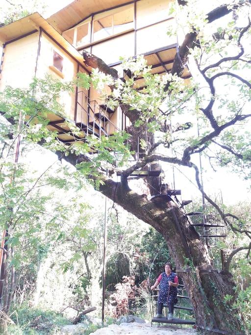 Casa sull 39 albero con vista sul golfo treehouses for rent - Airbnb casa sull albero ...