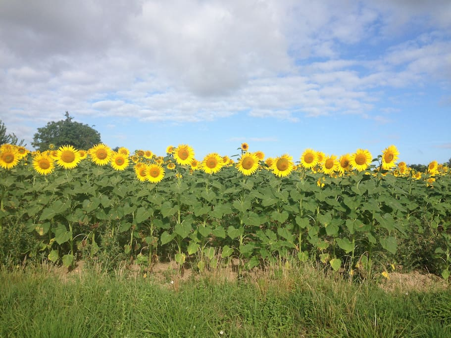 The area displays sunflowers and vines