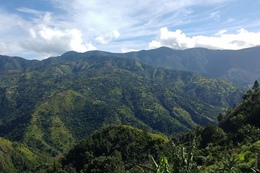 Welcome to Jamaica's Blue Mountains!
