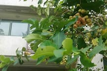 小区内的果树