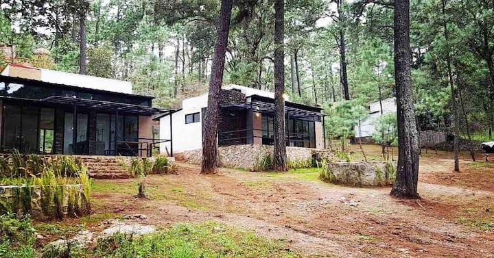 cabañas bosque viejo 2