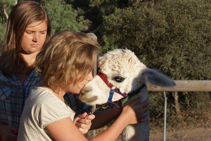 Experience Alpacas in Andalucia - Montoro