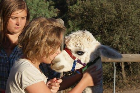 Experience Alpacas in Andalucia - Montoro - Apartamento
