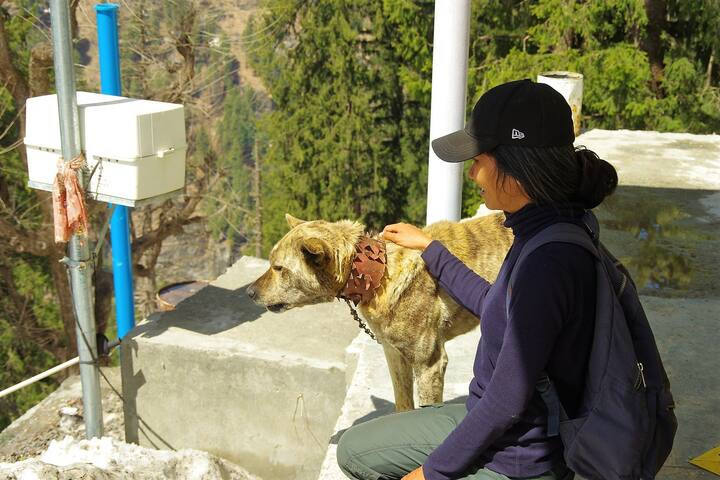 Meet Rambo, a rare mix breed of wild wolf and domestic dog. He is very friendly.