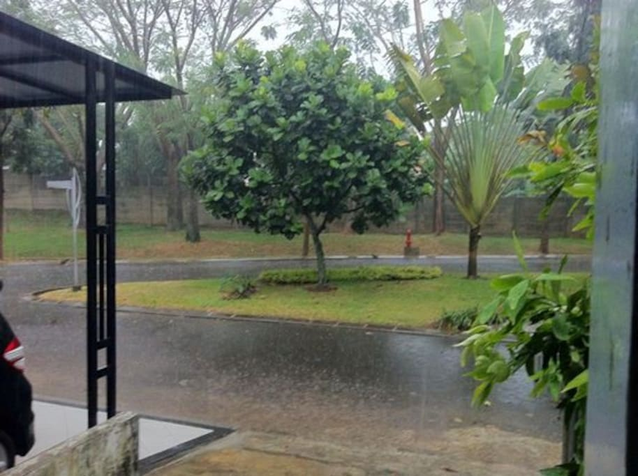 the garden in front of the house in the rain