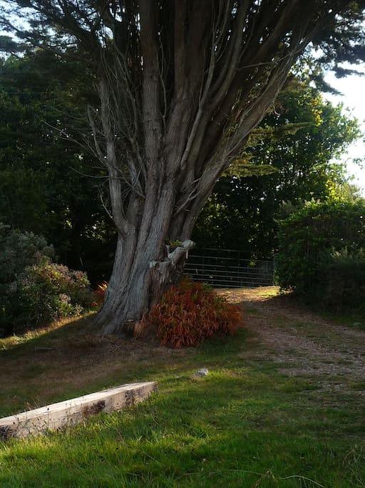 welcoming tree!