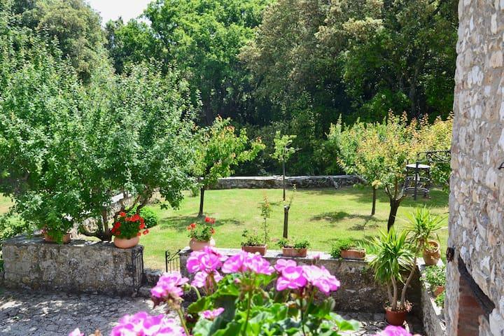 Frutteto e piante officinali. A seconda della stagione gli ospiti possono prendere pa frutta direttamente dai nostri alberi