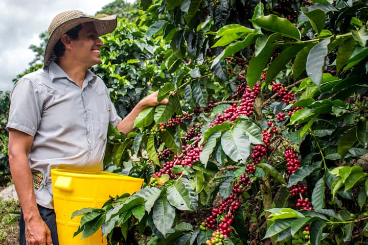 SpecialCoffee experience bird watching walkjungle