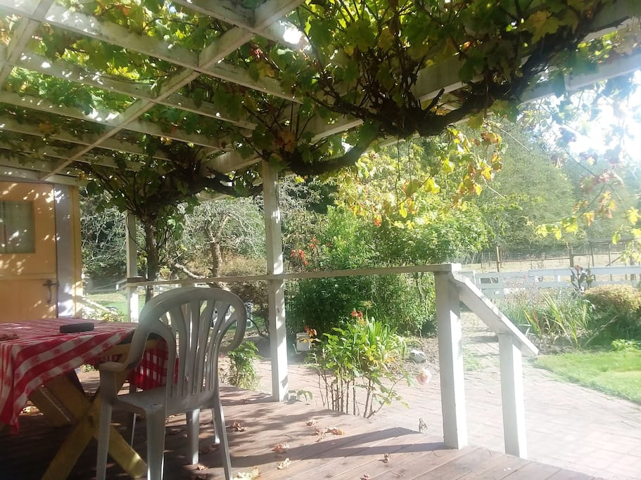 Fall afternoon on the southern deck under a century-old grapevine. Birds, fresh air, forest/pasture views, you can hear the ocean. No neighbors, no traffic, good wine and good food.