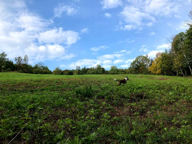 The newly mowed meadow right behind the Pondhouse!  leads to a wide logging trail that's a great hike. Charlie leads the way and helps guests find their way back IF they get lost!