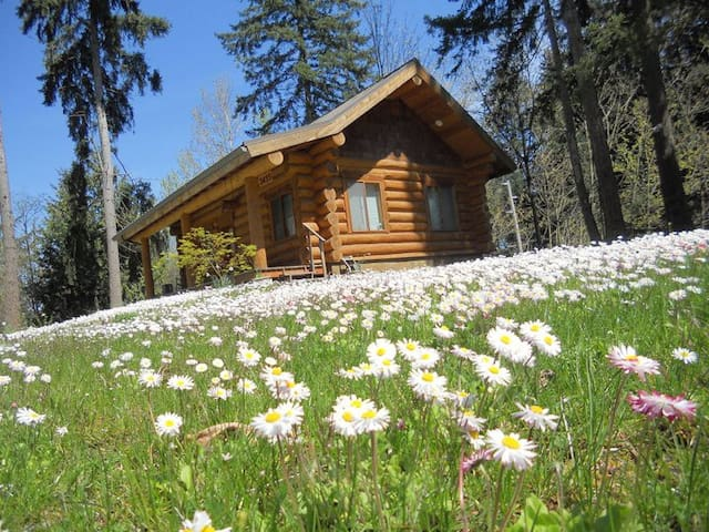 "The Cottontail Haven Lodge- your ""get-away"" place - Lake Tapps - Cabin"