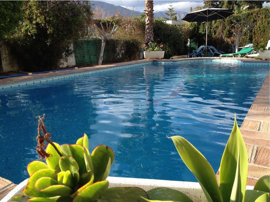 Villa marbella 8 9 pers avc piscine ville in affitto a for Piscine marbella