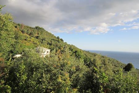 Armonia - Chorefto - 一軒家