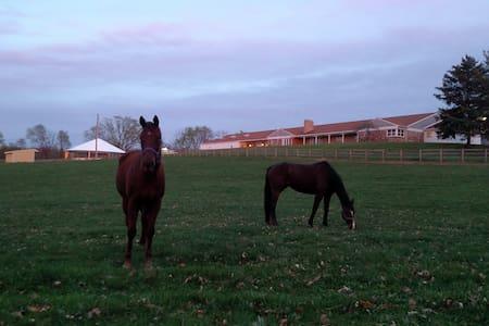 Hershey Area - A Beautiful Horse Farm