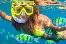 No need to pay for a snorkel boat.  The best snorkeling in Destin is a one mile walk down the beach from Mojo's community's beach access.  Just take our free, included snorkel gear and go for it!