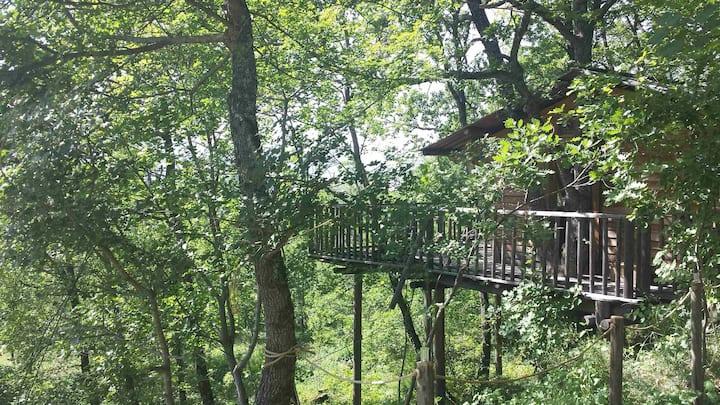Magnifique cabane dans les arbres, vue panoramique
