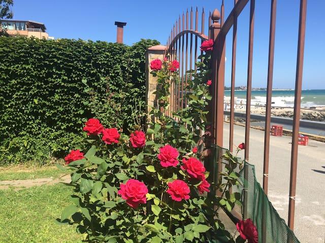 Sea front garden property