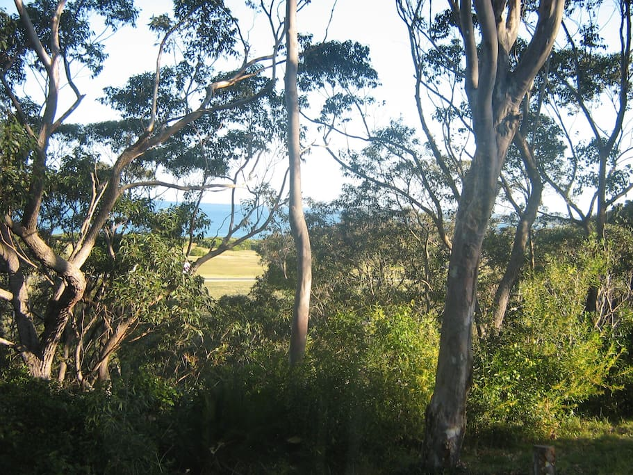 Views over Barlings Beach from covered verandah