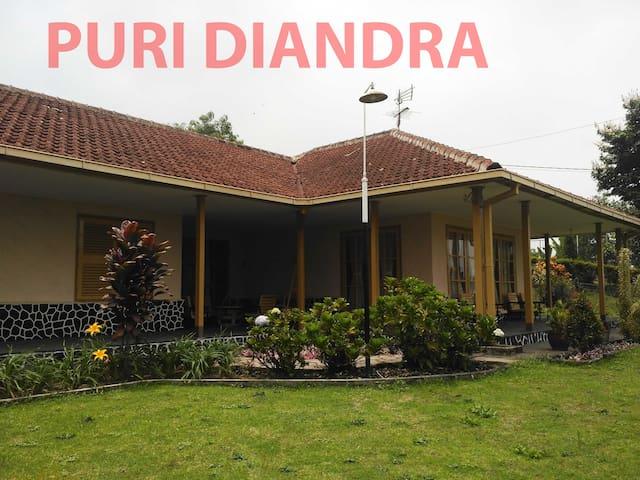 PURI DIANDRA