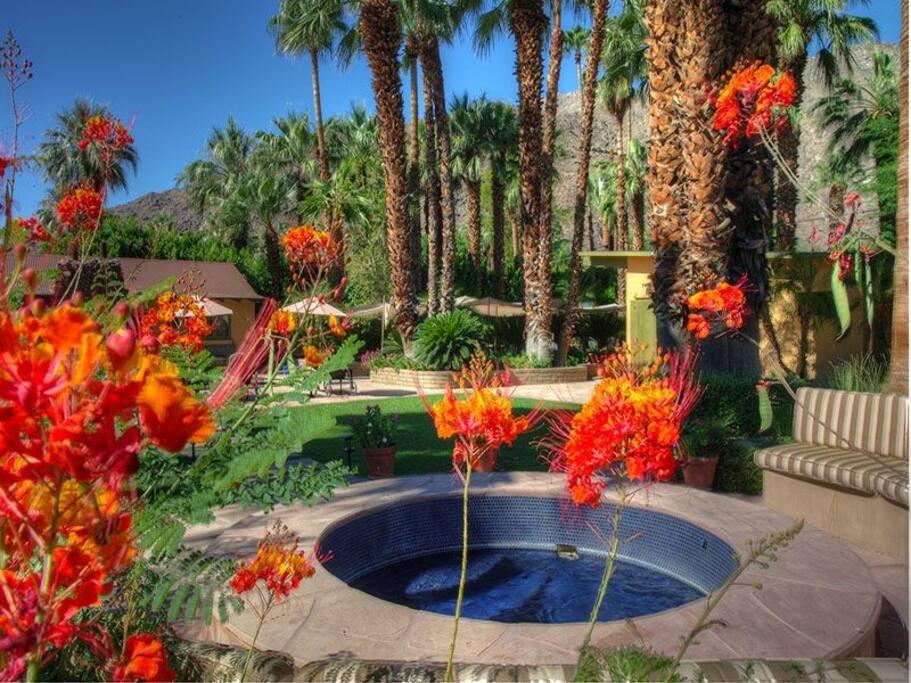 Hot Tub & Gardens