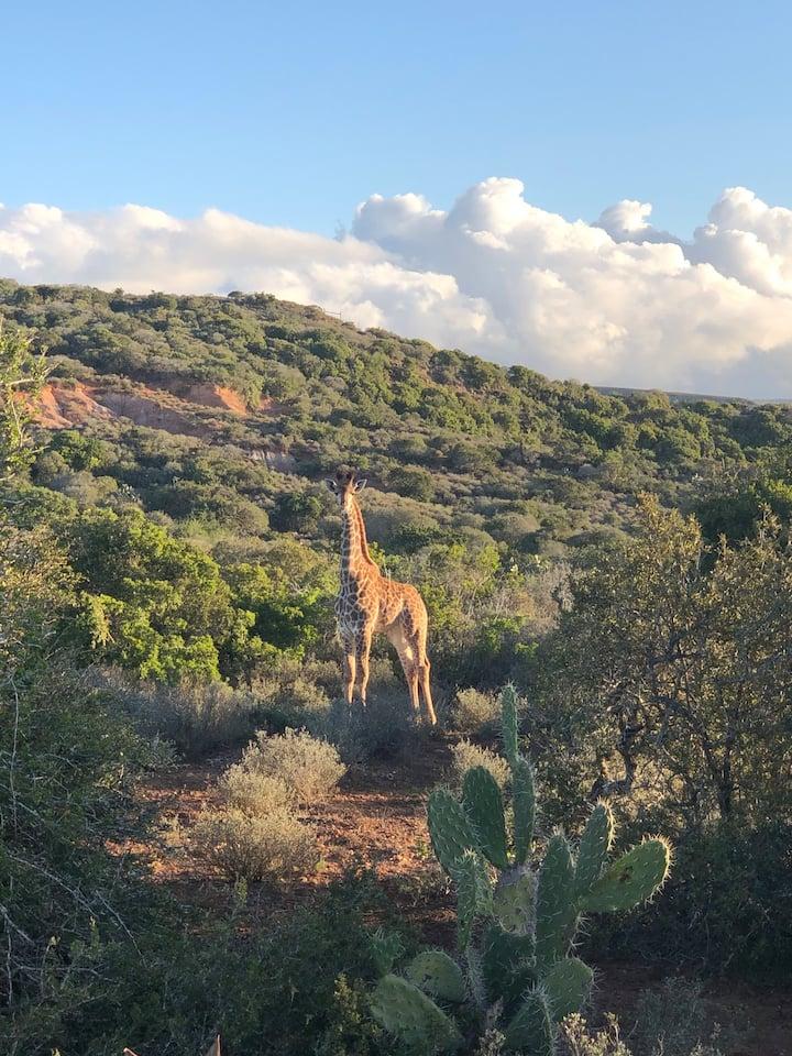 Safari & Wilderness Stay